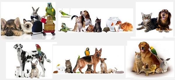 товары для животных со скидкой